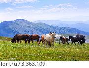 Купить «Лошади пасутся на альпийский лугах в горах. Алтай.», фото № 3363109, снято 17 июля 2011 г. (c) Яков Филимонов / Фотобанк Лори