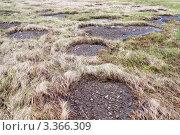 Купить «Вспучивание вечной мерзлоты в тундре», фото № 3366309, снято 12 июня 2011 г. (c) Андрей Радченко / Фотобанк Лори