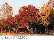 Купить «Золотая осень в парке Сеула», фото № 3402665, снято 30 октября 2009 г. (c) Ольга Липунова / Фотобанк Лори