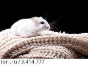 Купить «Белый хомяк на в сером вязаном шарфе», фото № 3414777, снято 26 марта 2012 г. (c) Irina Danilova / Фотобанк Лори