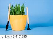 Купить «Трава в желтом горшке и садовые инструменты на голубом фоне», фото № 3417385, снято 25 марта 2012 г. (c) Елена Блохина / Фотобанк Лори