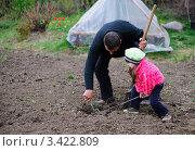 Купить «Отец с дочерью сажают растение на грядке», фото № 3422809, снято 19 октября 2018 г. (c) Сергей Галушко / Фотобанк Лори
