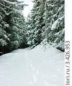 Купить «Следы в зимнем лесу», фото № 3426953, снято 11 марта 2008 г. (c) Дмитрий Наумов / Фотобанк Лори