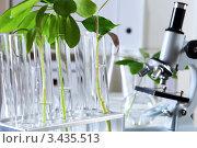 Купить «Зеленые ростки в пробирках и микроскоп в лаборатории», фото № 3435513, снято 13 декабря 2011 г. (c) Sergey Nivens / Фотобанк Лори