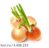 Четыре пророщенных луковицы. Стоковое фото, фотограф Discovod / Фотобанк Лори