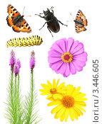Цветы и насекомые. Стоковое фото, фотограф Лукиянова Наталья / Фотобанк Лори