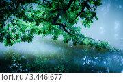 Ветка, склонившаяся к воде. Стоковое фото, фотограф Константин Хрипунков / Фотобанк Лори
