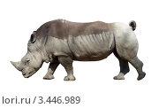 Носорог на белом фоне. Стоковое фото, фотограф Екатерина Ильина / Фотобанк Лори