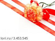 Купить «Гвоздика с лентой», фото № 3453545, снято 20 апреля 2012 г. (c) Peredniankina / Фотобанк Лори