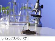 Купить «Зеленое растение в чашке Петри в лаборатории», фото № 3453721, снято 13 декабря 2011 г. (c) Sergey Nivens / Фотобанк Лори