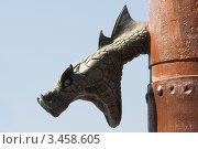 Купить «Голова змеи», эксклюзивное фото № 3458605, снято 19 августа 2011 г. (c) Журавлев Андрей / Фотобанк Лори
