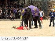Моменты представления на шоу слонов. Паттайя, Таиланд (2012 год). Редакционное фото, фотограф Григорий Писоцкий / Фотобанк Лори