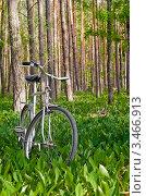 Остановка в лесу (2011 год). Редакционное фото, фотограф Игорь Митов / Фотобанк Лори