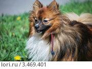 Собака на природе. Стоковое фото, фотограф Алла Корниенко / Фотобанк Лори