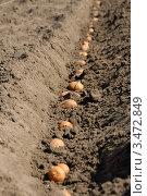 Купить «Выращивание картофеля, посадка», фото № 3472849, снято 26 апреля 2012 г. (c) Игорь Ткачёв / Фотобанк Лори