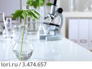 Купить «Растение в колбе на столе в биологической лаборатории», фото № 3474657, снято 13 декабря 2011 г. (c) Sergey Nivens / Фотобанк Лори