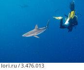 Купить «Шёлковая акула и дайвер», фото № 3476013, снято 13 декабря 2011 г. (c) Сергей Дубров / Фотобанк Лори