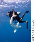 Купить «Дайвер поймал самца шелковой акулы», фото № 3476025, снято 13 декабря 2011 г. (c) Сергей Дубров / Фотобанк Лори
