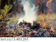 Купить «Сжигание прошлогодней травы и мусора/Костер», фото № 3483261, снято 30 апреля 2012 г. (c) Даша Богословская / Фотобанк Лори
