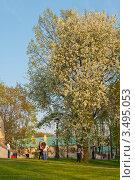Цветущая черемуха (2012 год). Редакционное фото, фотограф Сергей Родин / Фотобанк Лори