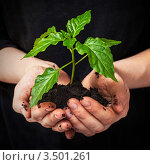 Купить «Молодое зеленое растение в руках», фото № 3501261, снято 6 мая 2012 г. (c) Anelina / Фотобанк Лори