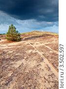 Одинокая сосна на холме в степи. Стоковое фото, фотограф Хромушин Тарас / Фотобанк Лори