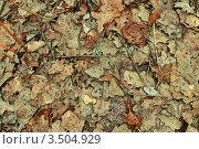 Старые сухие дубовые листья, фон. Стоковое фото, фотограф людмила озерова / Фотобанк Лори