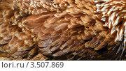 Перья курицы. Стоковое фото, фотограф Владислав Сернов / Фотобанк Лори