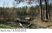 Подход к лесному озеру. Стоковое видео, видеограф Андрей Леонидов / Фотобанк Лори