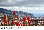 Купить «Португалия. Остров Мадейра в декабре, цветущие алоэ (лат. Aloe) на фоне города Фуншала и Атлантического океана», фото № 3516425, снято 22 декабря 2011 г. (c) Виктория Катьянова / Фотобанк Лори