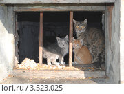 Купить «Кошки за решеткой», фото № 3523025, снято 17 мая 2012 г. (c) Дмитрий Савостин / Фотобанк Лори