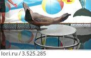 Купить «Выступление морского котика», видеоролик № 3525285, снято 2 сентября 2008 г. (c) Losevsky Pavel / Фотобанк Лори