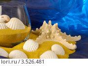 Морская звезда. Стоковое фото, фотограф Николай Белин / Фотобанк Лори