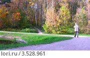 Пожилой мужчина прогуливается по осеннему парку, видеоролик № 3528961, снято 8 октября 2008 г. (c) Losevsky Pavel / Фотобанк Лори