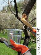 Купить «Замазываем срез у яблони садовым варом», фото № 3531741, снято 8 мая 2012 г. (c) Наталья Евстигнеева / Фотобанк Лори