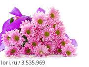 Букет розовых хризантем на белом фоне. Стоковое фото, фотограф Peredniankina / Фотобанк Лори