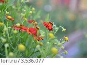 Садовые цветы, фон. Стоковое фото, фотограф Анна Кузнецова / Фотобанк Лори