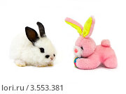 Белый крольчонок с розовым плюшевым зайцем. Стоковое фото, фотограф Владимир Никифоров / Фотобанк Лори