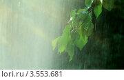 Купить «Ветка дерева под весенним дождем», видеоролик № 3553681, снято 22 мая 2012 г. (c) ILLYCH / Фотобанк Лори