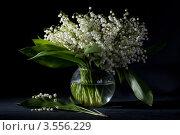 Купить «Натюрморт с ландышами в вазе на черном фоне», фото № 3556229, снято 30 мая 2012 г. (c) Ольга Денисова / Фотобанк Лори