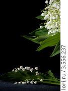 Купить «Цветы ландыша», фото № 3556237, снято 30 мая 2012 г. (c) Ольга Денисова / Фотобанк Лори
