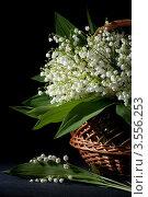 Купить «Букет ландышей в плетеной корзинке», фото № 3556253, снято 30 мая 2012 г. (c) Ольга Денисова / Фотобанк Лори