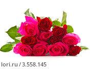 Букет из розовых и красных роз на белом фоне. Стоковое фото, фотограф Peredniankina / Фотобанк Лори