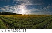 Купить «Солнце над рапсовыми посевами. Беларусь.», фото № 3563181, снято 26 мая 2012 г. (c) Виктор Пелих / Фотобанк Лори