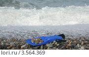 Купить «Ласта с ракушками лежит на гальке на берегу моря», видеоролик № 3564369, снято 4 марта 2010 г. (c) Losevsky Pavel / Фотобанк Лори
