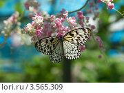 Бабочка на цветке. Стоковое фото, фотограф Андрей Пех / Фотобанк Лори