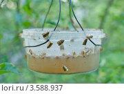 Купить «Ловушка для вредителей сада», эксклюзивное фото № 3588937, снято 12 июня 2011 г. (c) Короленко Елена / Фотобанк Лори