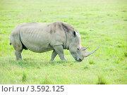 Купить «Носорог. Кения», фото № 3592125, снято 7 июня 2012 г. (c) Екатерина Овсянникова / Фотобанк Лори