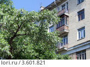 Купить «Цветущий тополь у старого жилого дома», эксклюзивное фото № 3601821, снято 29 мая 2012 г. (c) Родион Власов / Фотобанк Лори
