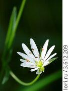 Открытка - Дарю цветок! Стоковое фото, фотограф Денис Антонов / Фотобанк Лори